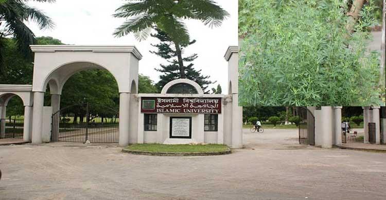 ইসলামী বিশ্ববিদ্যালয়